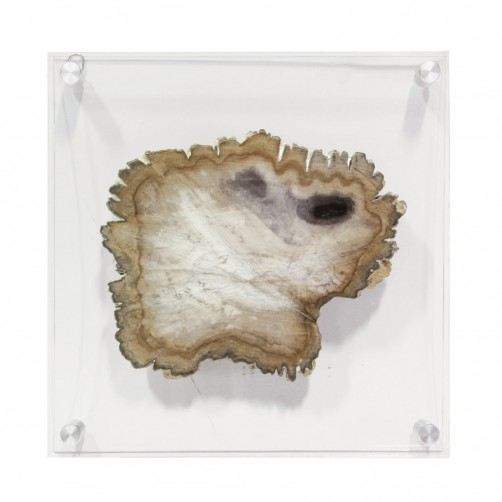 petrified wood acrylic wall decor