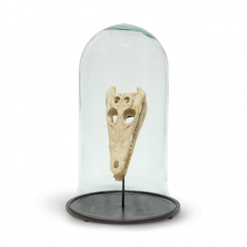 alligator skull cloche