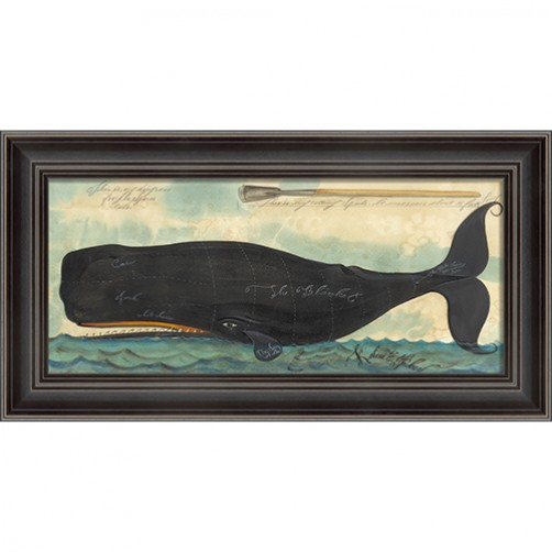 """diagram for the sperm whale cuts"" whale art"