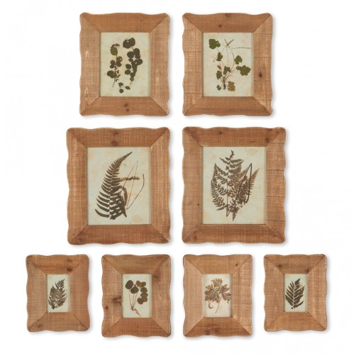 framed pressed botanical specimen print set of 8