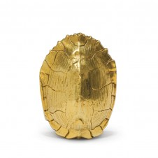 gold turtle shell, small