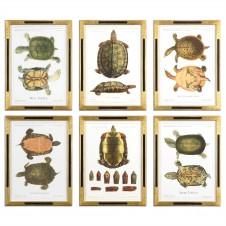 uttermost tortoise study art, set of 6