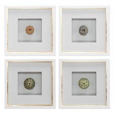 uttermost sea urchins art, set of 4