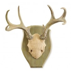 large mounted antlers