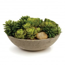 """8.5"""" potted mixed succulents"""