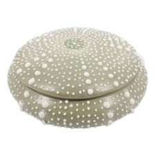 homart large sea urchin box