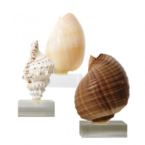 large shell on glass base
