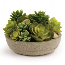 """6.5"""" potted mixed succulents"""