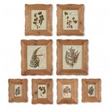 framed pressed botanical specimen print set of 8
